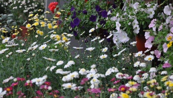 Fotoieskats vasarīgi ziedošajā botāniskajā dārzā Salaspilī