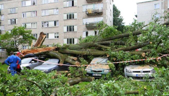 Vecs ozols Rīgā sadragā vairākus auto