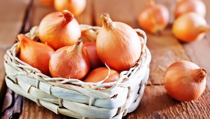 Saimnieču padomi - kur un kā vislabāk glabāt sīpolus, lai tie nesabojātos?