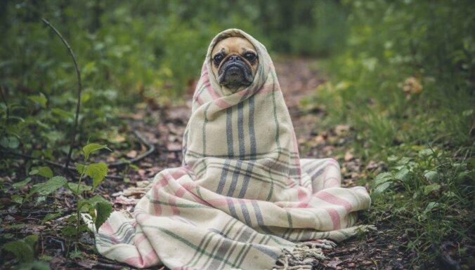 Auksti vienmēr un visur? Iemesli, kāpēc allaž ir vēsi