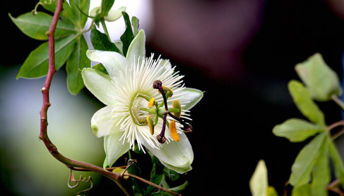 Unikāli ziedi, kas pārsteidz ar savu neparasto skaistumu