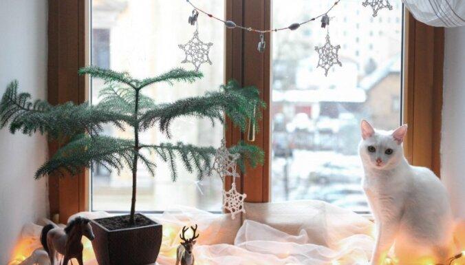 Ziemassvētku foto konkurss noslēdzies, mobilo tālruni 'Huawei P9' iegūst Elīna