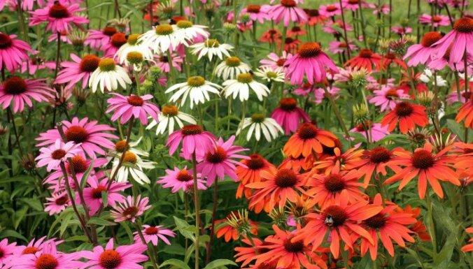 Посадил и забыл: 5 лучших многолетников для вашего сада