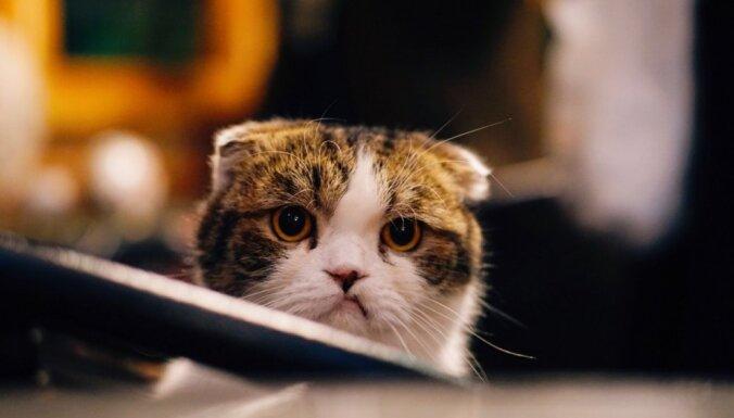 Septiņas lietas, ko kaķis gribētu pateikt savam saimniekam