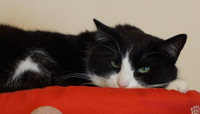 Saimniece pārvācās, bet kaķi atstāja. Mājas meklē pamestais Barons un citi melnbalti kaķīši