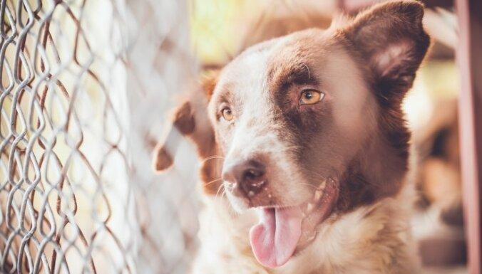 Covid-19: Ierobežojumi un apmeklējuma kārtība dzīvnieku patversmēs