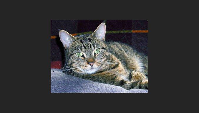Kaķis. Foto: Bill Hardwick