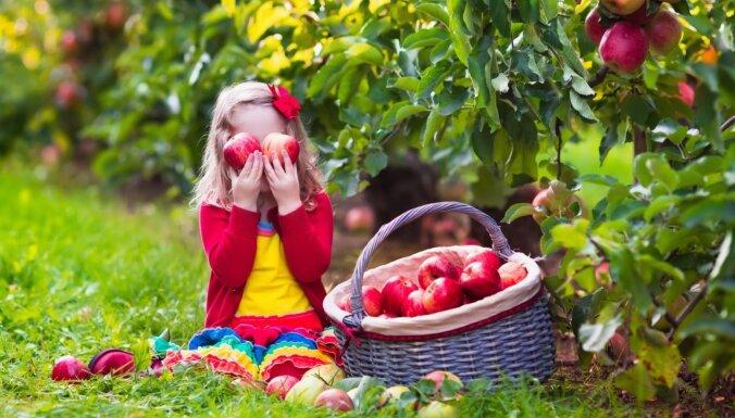 Dobele 2. oktobrī aicina uz tradicionālajiem ābolu svētkiem