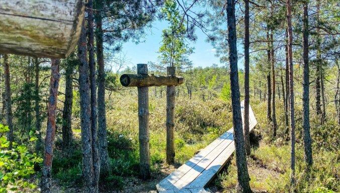 ФОТО. Летняя прогулка по уникальному Ценскому болоту, расположенному в 30 км от Риги