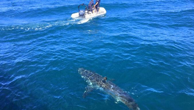 Austrālijas pludmalēs peldētājus par haizivīm brīdinās droni