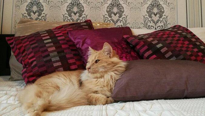 Смертельные лилии: как жизнь кота Лео угасла за неделю