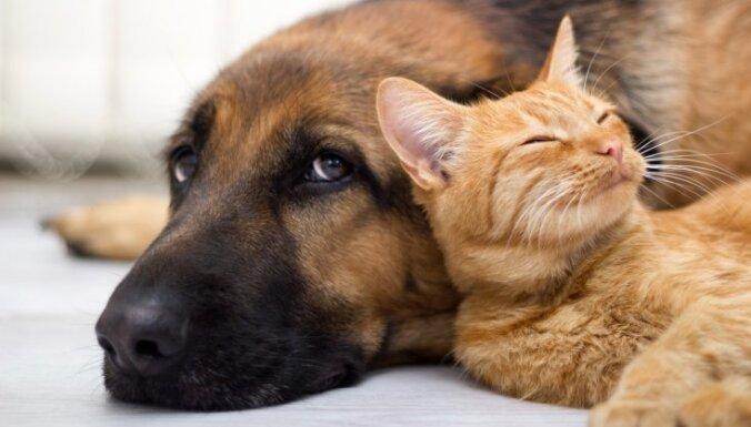 Suns reģistrēts kā kaķis, liecina mikročips. Vai tā notiek arī Latvijā?