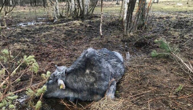 Piltenes pagastā labturības pārkāpumu dēļ PVD izņem 23 mājdzīvniekus