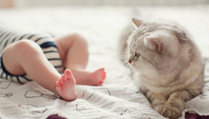 Kaķis un jaundzimušais. Kā sagatavot mājdzīvnieku bērna ienākšanai ģimenē