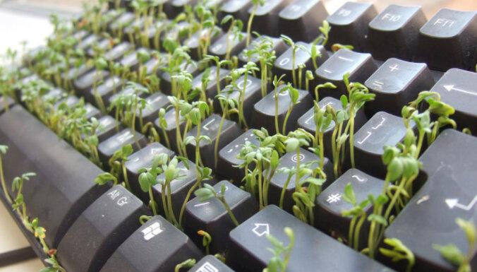 Skolas eksperimentā noskaidro, ka Wi-Fi rūtera tuvumā augi iznīkst