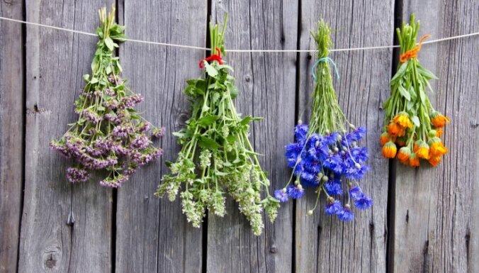 Ziedi, kas izmantojami ne tikai dārza skaistumam, bet arī vēderpriekam