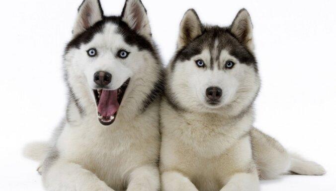 Starptautiskā kaķu un suņu izstāde 'Dzīvnieku pasaule'