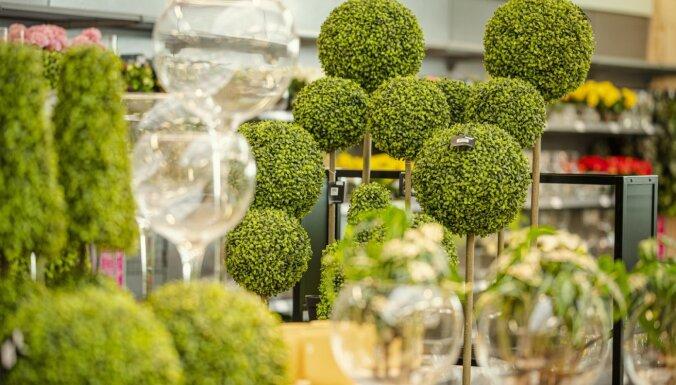 Foto: Dārza un mājas preču centrs 'Hortes' vēris durvis apmeklētājiem