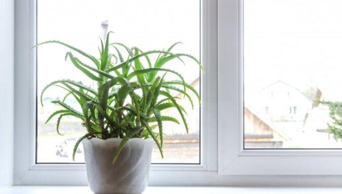 Сном младенца: Топ-9 растений для спальни, которые улучшат ваш сон