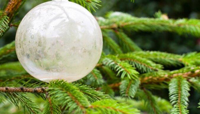 Baltijas valstu iedzīvotāji ir runājuši. Skaistākā Ziemassvētku egle noskaidrota