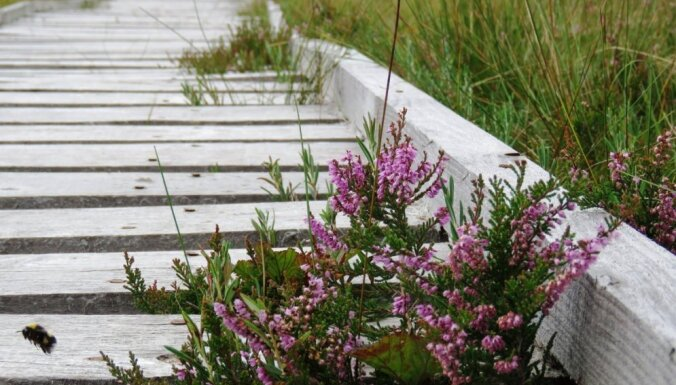 Куда поехать на выходных: болотная тропа вдоль Бездонного озера