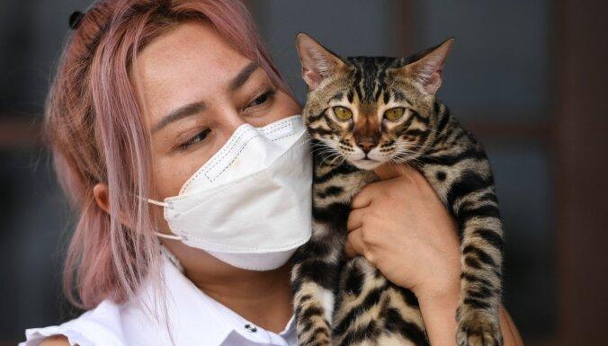 Pētījums: Liela daļa kaķu un suņu var 'saķert' jauno koronavīrusu no saimniekiem
