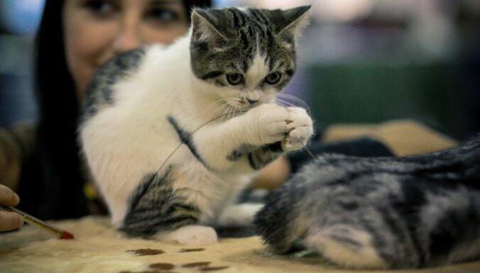 Kaķu, suņu un citu mīluļu izstāde Ķīpsalā jeb Ko šogad piedāvās 'ZooExpo 2015'
