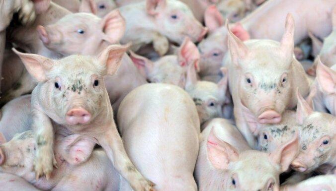 На покрытие убытков от АЧС фермерам выделили 1,546 млн евро