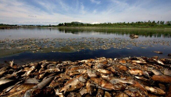 В реках Ича и Айвиексте массово гибнет рыба