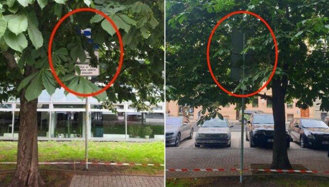 Foto: Bruņinieku ielā jaunā ceļa zīme uzstādīta koka lapu vainagā