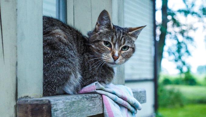 'Ulubele' lūdz palīdzību kaķu dārza izveidei