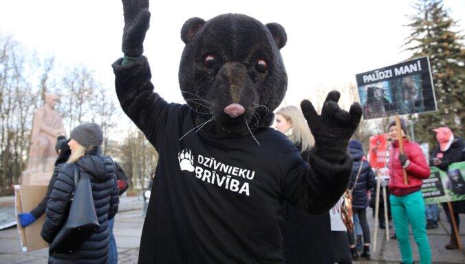 Шубы не в моде. Сейм рассмотрит предложение запретить разведение пушных зверей в Латвии