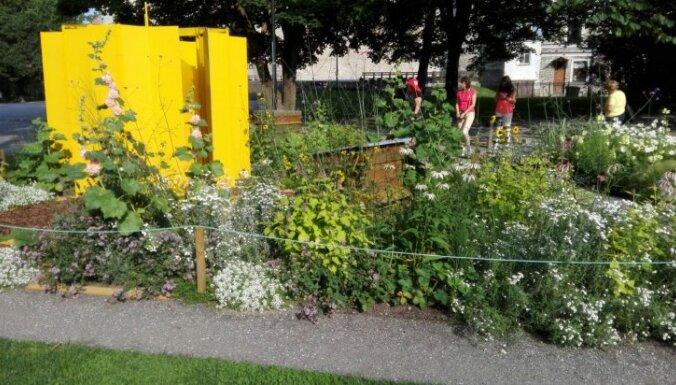 Foto: Augu ekspozīcija, kas plūca laurus Tallinas ziedu festivālā
