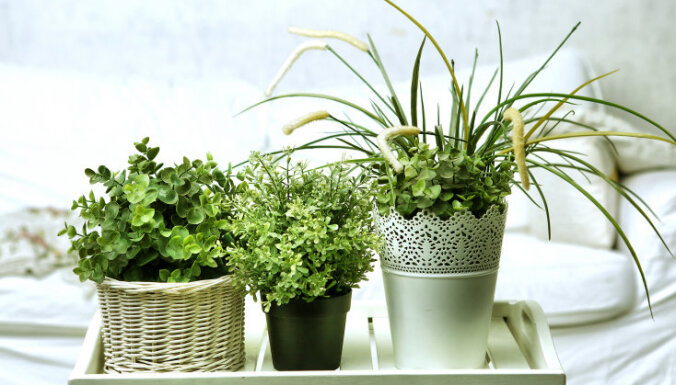 Зеленый сон: выбираем лучшие растения для спальни