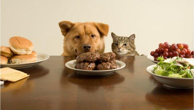 Suns svaigēdājs, veģetārietis vai vegāns; diētas ietekme uz dzīvnieka veselību