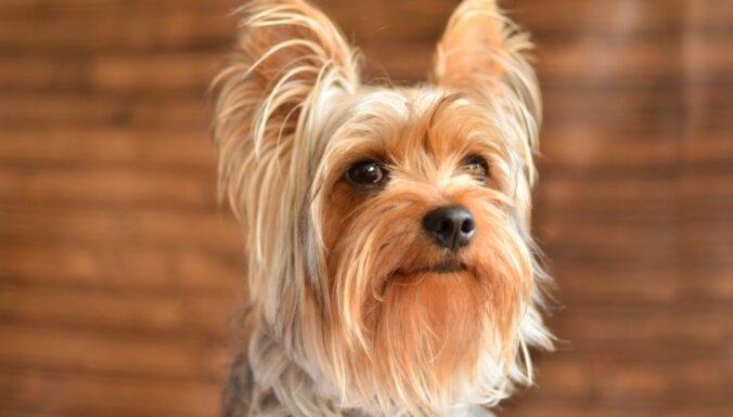 И жили они долго и счастливо: 13 пород собак-долгожителей