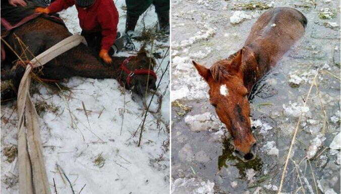 Riebiņu novadā no grāvja izceļ ledū ielūzušu zirgu