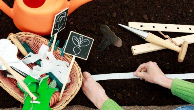 Pirmā pavasara garša dobē – redīsu šķirnes un augšanas priekšnosacījumi