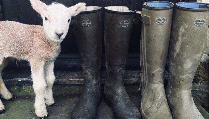Бренд начал торговать обувью, покрытой настоящей грязью