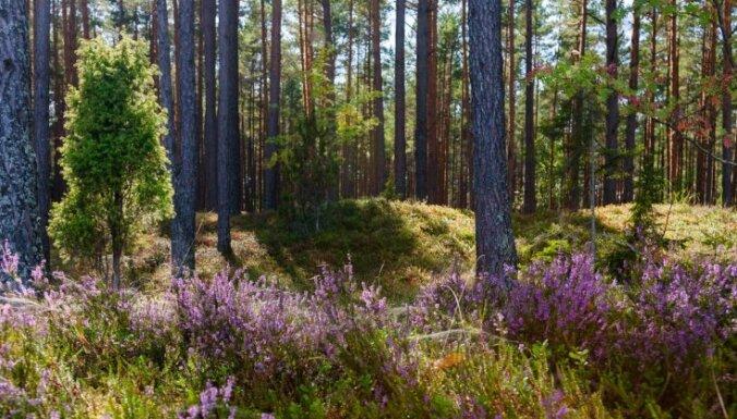 Скупщики леса пугают владельцев лесов биотопами, чтобы дешево приобрести участки