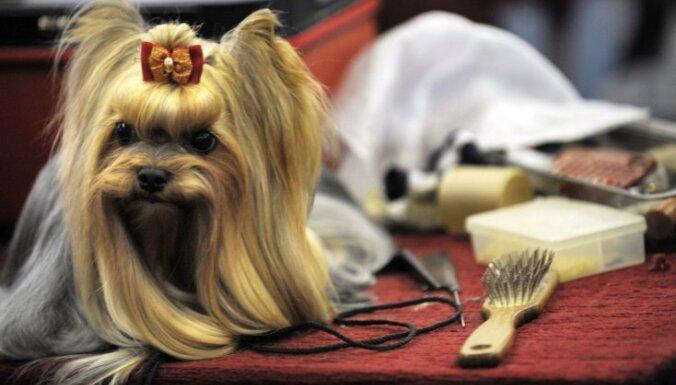 Всем собакам в Англии поставят микрочипы к 2016 году