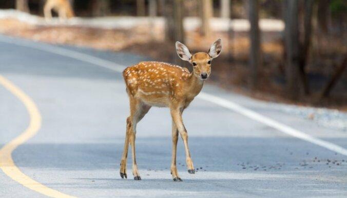 О животных на дорогах водителям будут сообщать новые предупреждающие устройства