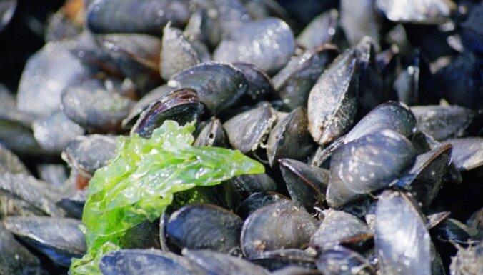 Latvijas saldūdens gliemenēs atrasts pretsāpju līdzeklis ibuprofēns