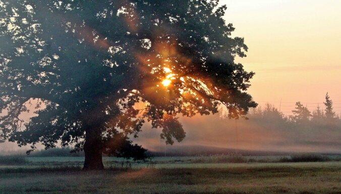 ФОТО: Красиво и завораживает - туманное утро сентября