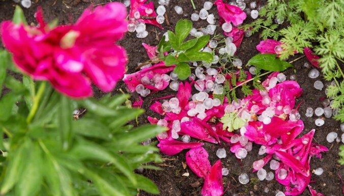 Kā pasargāt dārzu no krusas postījumiem