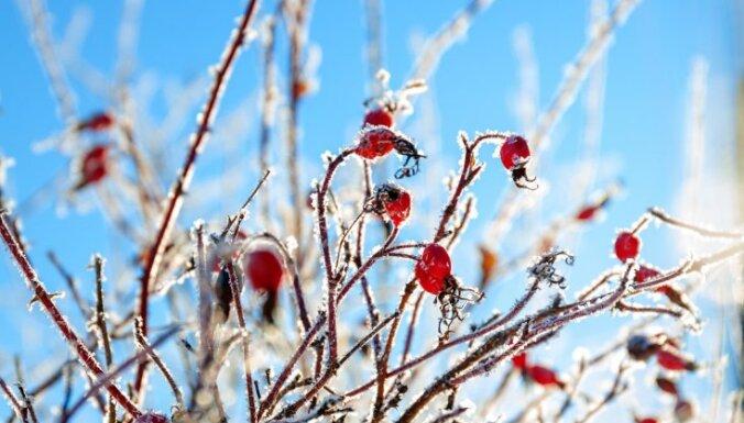 Прохладная погода сохранится до будущей недели, ожидаются заморозки до -5 градусов