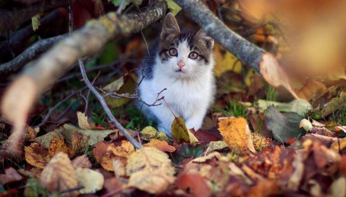 В прошлом году Рижское самоуправление стерилизовало 1400 бездомных котов