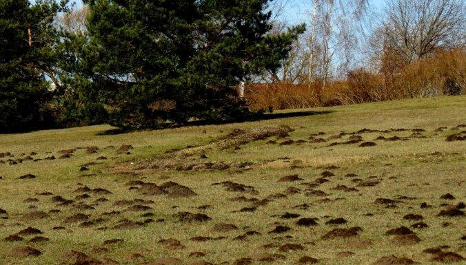 Leons Stiprais: Kurmju invāzija Mālkalnā – kā izskaidrot šo fenomenu?