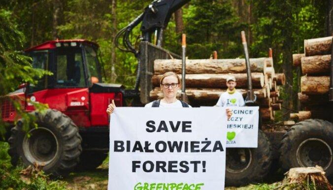 Польские экологи раскритиковали вырубку леса в Беловежской пуще