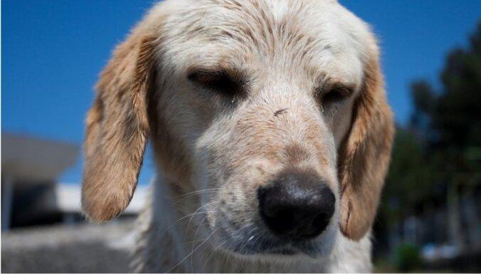 Истязатель собаки пять лет избегает наказания и, возможно, сбежал из Латвии